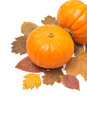 Orange Pumpkin On Autumn Leaves Isolated And Space For Text Royalty Free Stock Photography - 42352237
