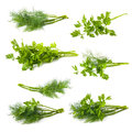 Parsley And Dill Isolated On White Background Royalty Free Stock Photo - 42369205