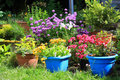 Various Colorful Flowers In The Home Garden Royalty Free Stock Photo - 42376445