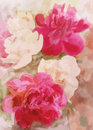 Greeting Floral Card With Peony Royalty Free Stock Image - 42379036