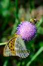 Butterfly And Bumble Bee Stock Photo - 42393950