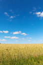 Grain Field. Royalty Free Stock Image - 42397046