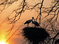 Storks Royalty Free Stock Photography - 4242357
