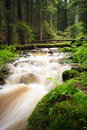 Forest Stream Stock Photography - 4245392