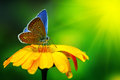 Blue Butterfly Stock Photography - 42420952