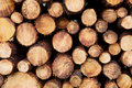 Stacked Timber Logs Stock Photography - 4250762