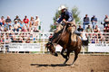 Saddle Bronc Royalty Free Stock Image - 4258326