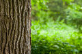 Tree Trunk Close Up Royalty Free Stock Photo - 42522235