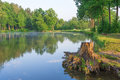 Stump On The Lake In The Forest Stock Photos - 42539053