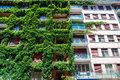 Green Building Covered Ivy Royalty Free Stock Photo - 42549025