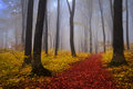 Foggy Mystic Forest During Fall Stock Image - 42566481