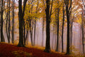 Foggy Mystic Forest During Fall Royalty Free Stock Photography - 42566487