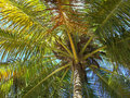 Palmtree Stock Photo - 4269310