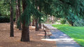 Shady Alley In The Park. Stock Photo - 42605890