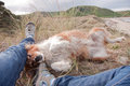 Red Collie Dog Lying Beside Owner S Legs At A Beach Royalty Free Stock Photos - 42631128