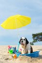 Cooling Down For Dog At The Beach Royalty Free Stock Photography - 42721397