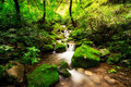 Small Creek In A Mossy Forest Stock Images - 42739164