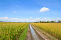 Irrigation Canal In Rice Field Royalty Free Stock Image - 42749166