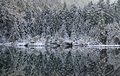 Forest Reflection Stock Image - 42765921