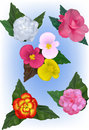 A Collection Of Begonia Flower Vector Illustrations Stock Photos - 42779963