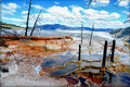 Mammoth Hot Springs Royalty Free Stock Images - 42795339