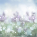 Blue  And Green  Festive Background Stock Images - 42828404