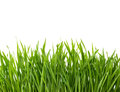 Green Grass Isolated On White Background. Royalty Free Stock Images - 42828649