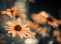 Yellow Flowers Stock Images - 42835084
