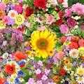 Background With Flower Bouquets Stock Image - 42853671