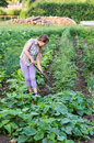 Girl Working On A Garden Stock Photo - 42866230