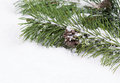 Fir Branch With Snow And Pine Cone Stock Photo - 42868530