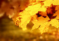 Dry Autumn Leaf Stuck Royalty Free Stock Photography - 42875087