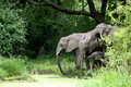 Elephant Family Drinking Water Royalty Free Stock Images - 42889019