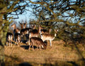 Family Group Of Deer Royalty Free Stock Image - 4290656