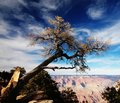Grand Canyon-2 Royalty Free Stock Photography - 4295407