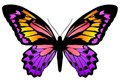 Butterfly 6 Royalty Free Stock Photos - 4295588