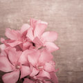 Pink Oleander Flowers Close Up On Wooden Background Royalty Free Stock Photography - 42923717
