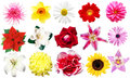Clipart Flowers Royalty Free Stock Photography - 42980357