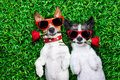 Love Couple Of Dogs Royalty Free Stock Image - 42981266