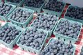 Blueberries Stock Photography - 43001512