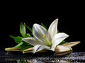 White Freshness Lily Royalty Free Stock Images - 43006249