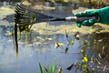 Cleaning A Pond Stock Photography - 43027512
