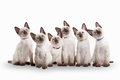 Six Small Thai Kittens On White Background Royalty Free Stock Photography - 43056317
