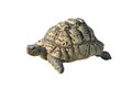 Turtle Royalty Free Stock Photo - 43070015
