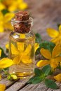 Oil From The Flowers Of St. John S Wort Macro Vertical Stock Image - 43101691