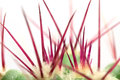 Red Spikes Of Green Cactus Stock Images - 43126924
