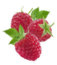 Three Raspberries And Leaves Isolated On White Background Stock Photo - 43127870