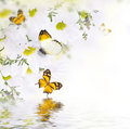 Spring Bouquet Of Daisies And Butterfly Stock Photos - 43133753
