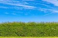 Hedgerow In The English Countryside Stock Images - 43169114