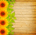 Wooden Fence, Green Leaves And Sunflowers Royalty Free Stock Images - 43175819